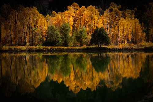 autumn reflection nature water horizontal forest landscape outdoors photography colorado day scenic tranquility nopeople northamerica telluride majestic idyllic aspentree colorimage beautyinnature