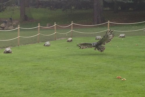 Ernie the Milky Eagle Owl