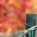 autumn bokeh by nettisrb