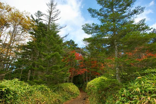 白駒池への入り口