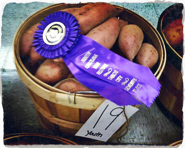 Prize-winning yams from the NC Yam Festival