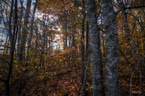 usa fall tennessee burns montgomerybellstatepark canon7d creechhollow autumnexplosion