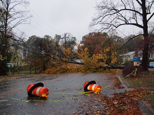 Tree down on Lincoln Ave (02)