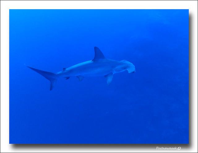 de retour de mer rouge - EGYPTE 8142674790_9fa44c972d_z