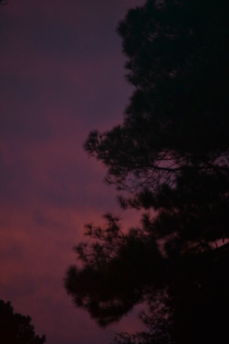 sunset sky tree silhouette clouds purple