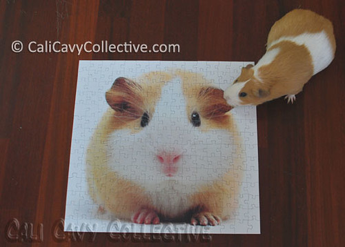 Peaches with guinea pig puzzle