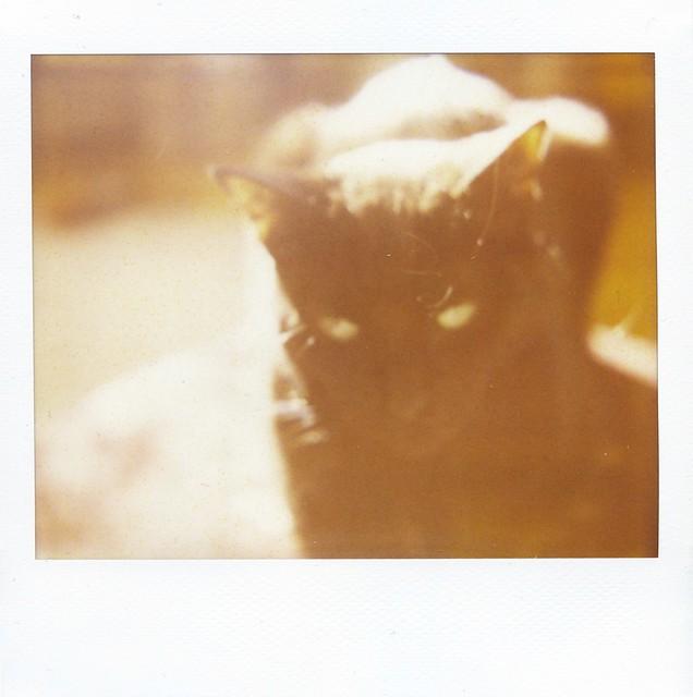 polaroid - dreamy henry