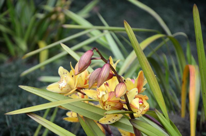 Orquídeas // Orchids