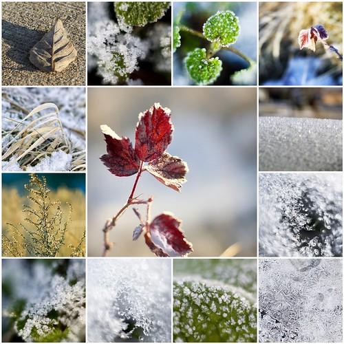 mosaic January