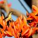 Female Purple Sunbird @ RK Mission by gndeep