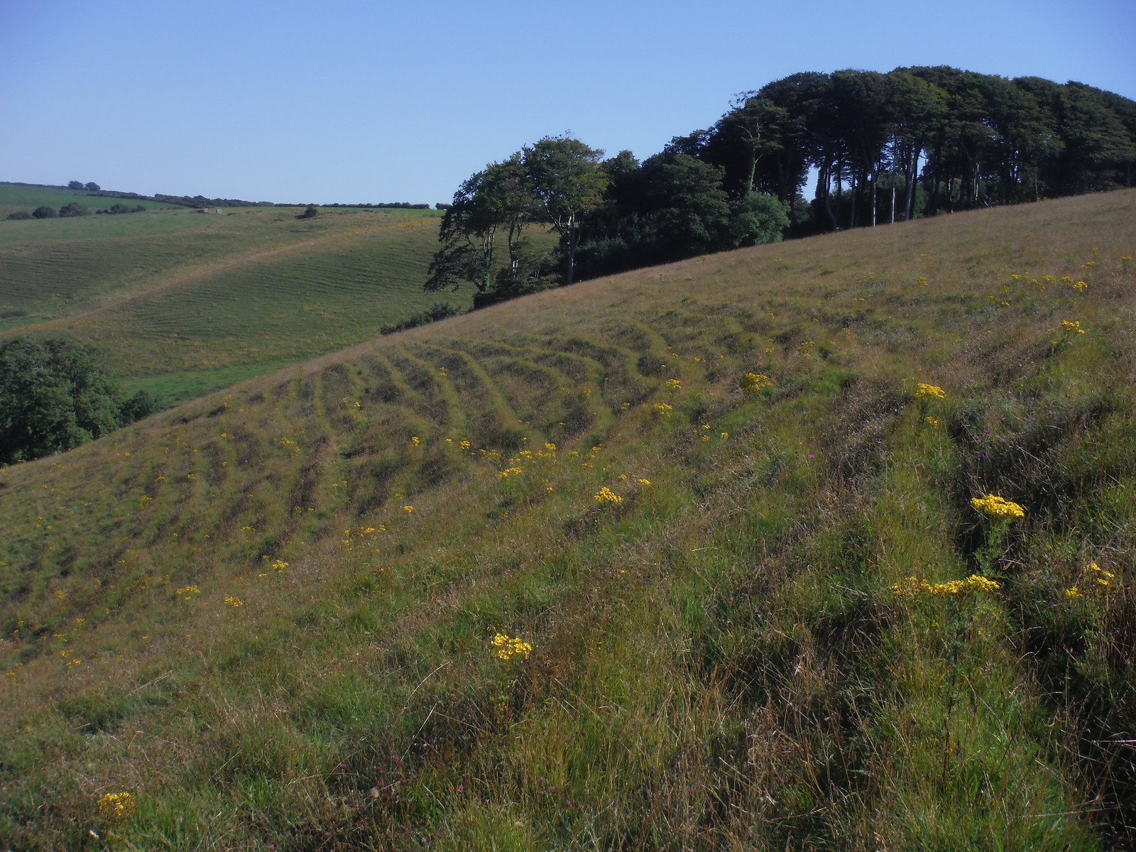 Tenants Hill Ascent SWC Walk 275 Dorchester South Circular or to Portesham (Extension)