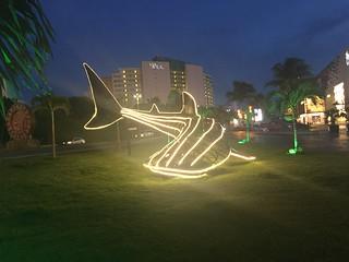 Tiburón de Luz