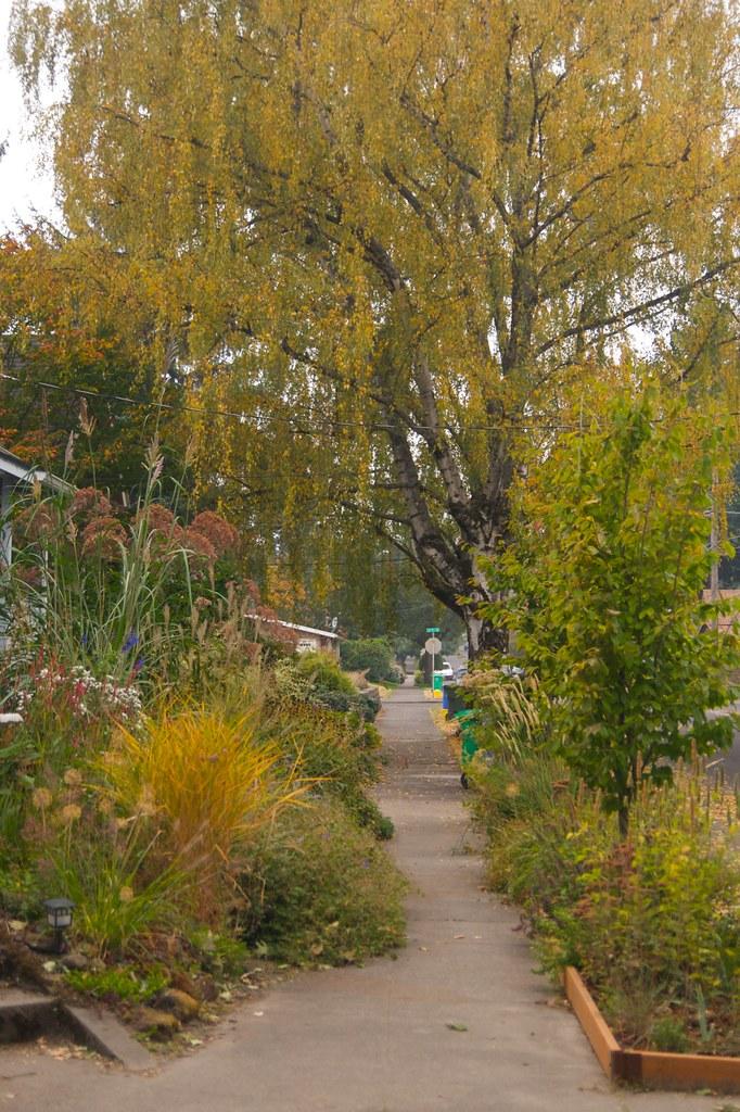 october garden v  2229