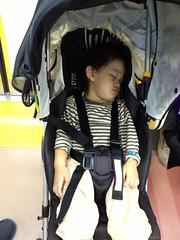 電車で寝るとらちゃん (2012/10/13)