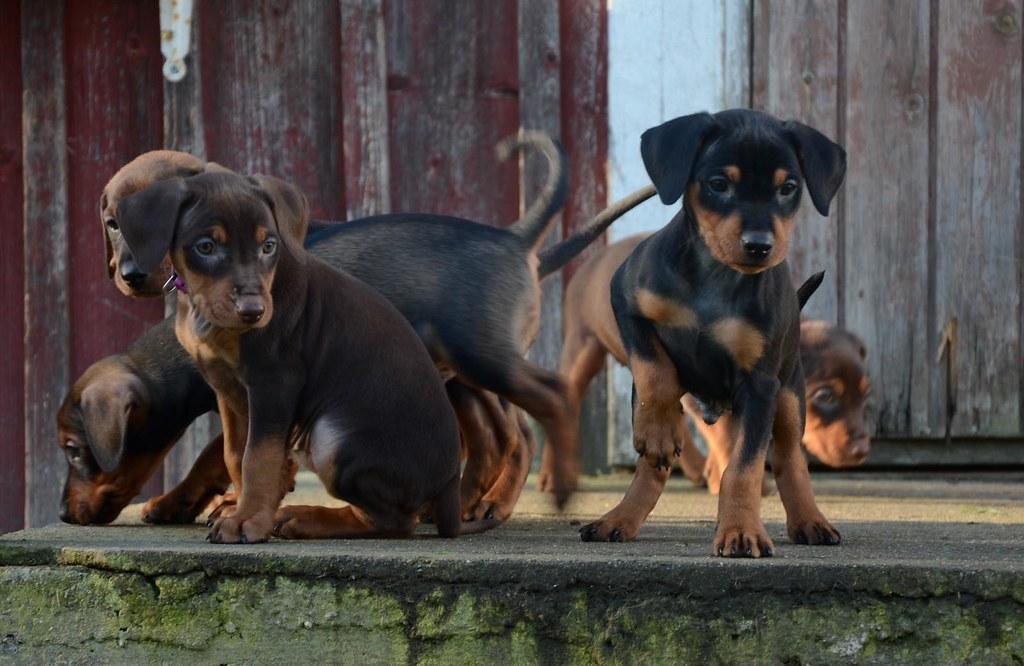 En liten familieforøkelse :) OPPDATERT s.3 med litt nye bilder! :D 8088114922_70a64ab800_b