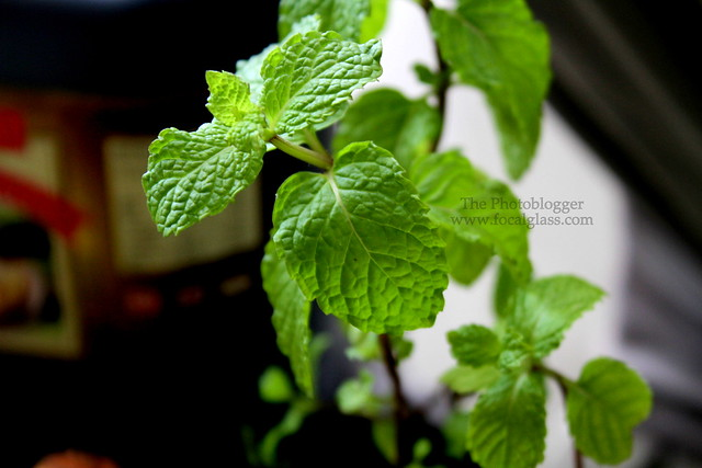 Thai Mint Leaves
