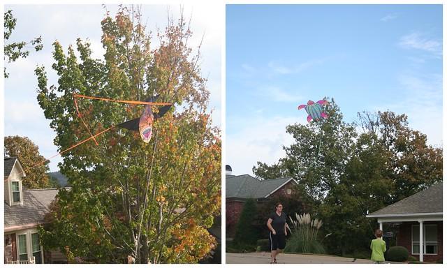 Flying Kites3