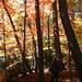 Ryan in the ravines of Fort Sheridan. Wilmette, IL by Alex Cheek