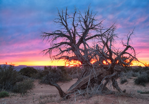 park sunset evening utah desert arches sage national moab burningbush shrubs janusz leszczynski 094210 10172012