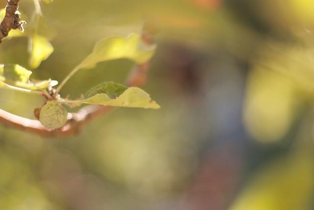riley apple farm by lani trock