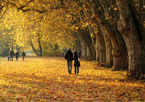 Romantic Autumn Walk