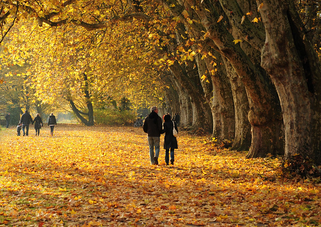Romantic Autumn Walk