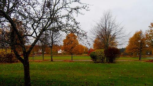 Ingesund