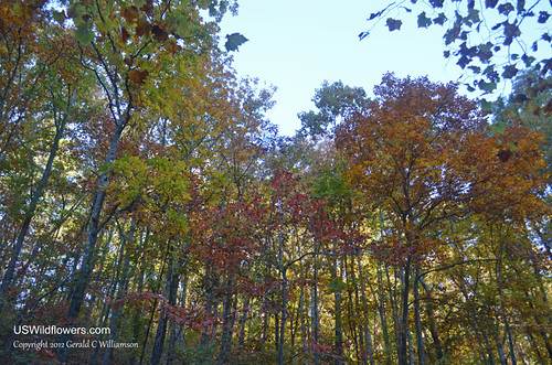 Fall Colors - Pigeon Mountain by USWildflowers, on Flickr