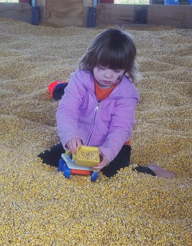 Lucy in the corn bin