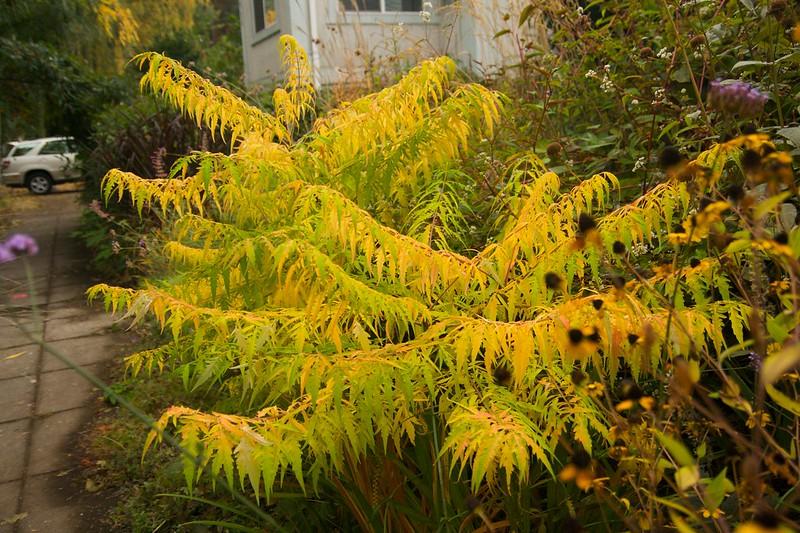 sumac foliage  2368