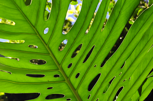 TEXTURA VERDE - (23) | Flickr - Photo Sharing!
