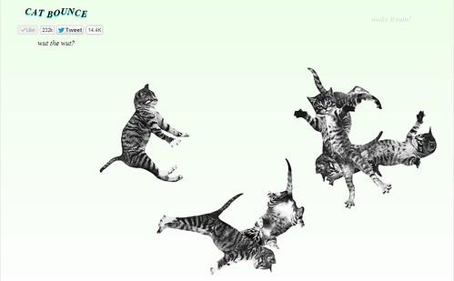 cat-bounce