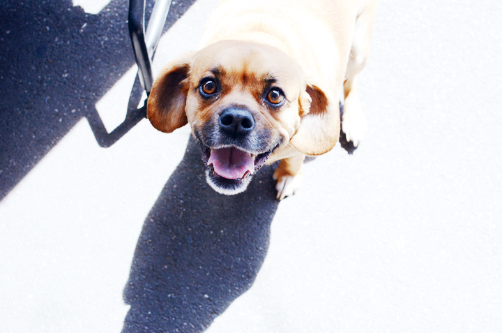 doggy2