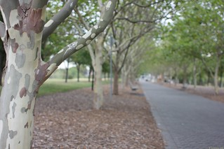 Sydney Bicentennial Park - 12-Jan-2013