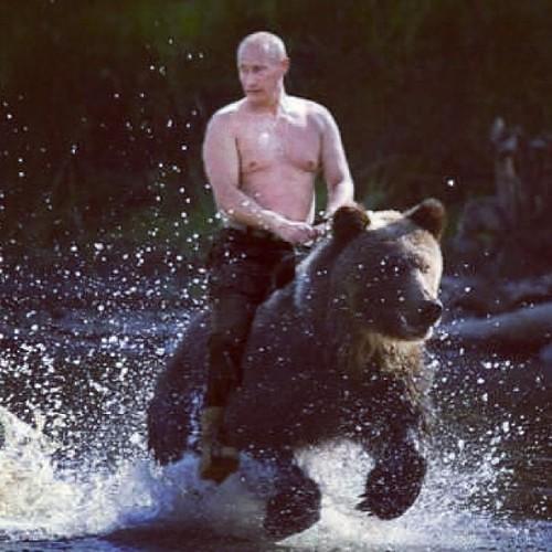 Vladimir Putin S Personal Bear Flickr Photo Sharing