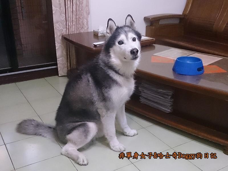 Doggy貪吃狗5等1