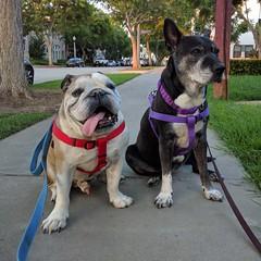 Frankie & Sasha