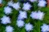 Blur - flowers