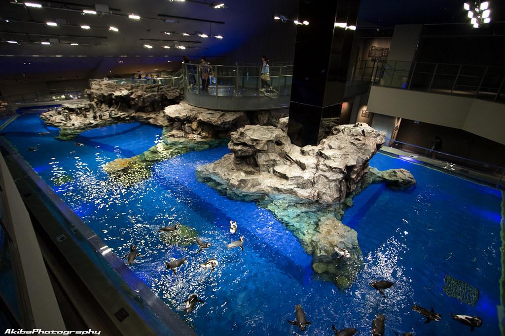 sumida-aquarium#29