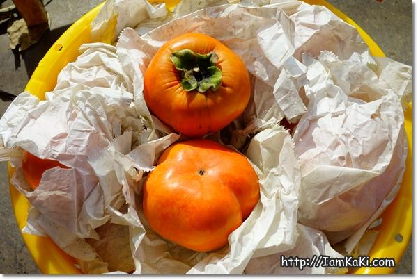 謝謝妳甜柿樹媽媽,謝謝老天爺!