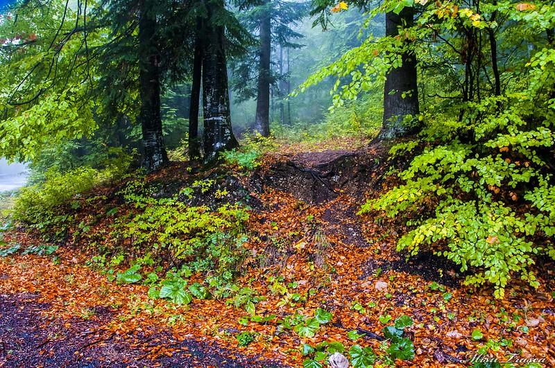 pădure toamna