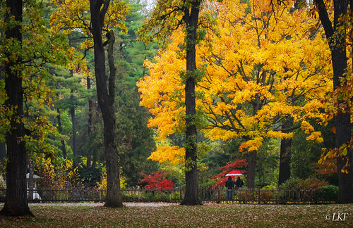 park trees fall nature rain japanesegarden illinois geneva natureza batavia foxriver soe fabyanforestpreserve rememberthatmomentlevel1 bewiahn