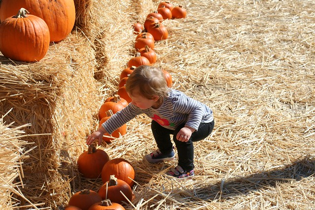 10-13-12 26 pumpkin patch