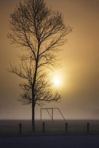 tree fog sunrise winnipeg manitoba