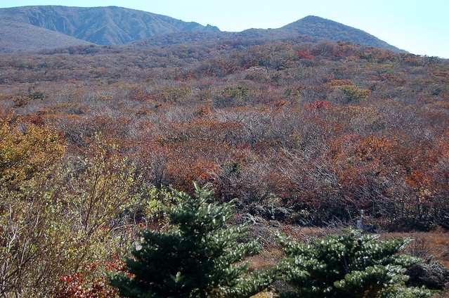 漢拿山國家公園 1100高地