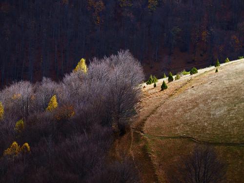europe serbia srbija golija landscape scenery mountain forest light autumn fall sunset yellow nikon