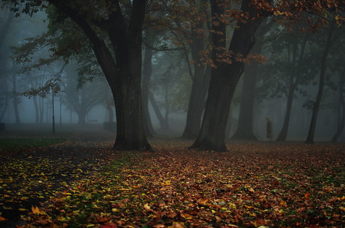 park morning autumn trees woman mist cold fall leaves weather fog 35mm nikon europe walk ghost sunday foggy poland shroud dense poznan solacz d80 goingtochurch