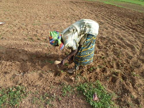 africa woman village farming westafrica farmer agriculture climatechange adaptation burkinafaso cgiar foodsecurity ccafs amkn cgiarclimate