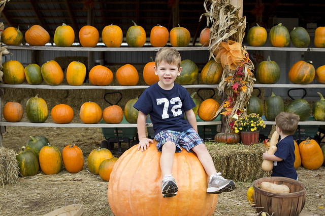 pumpkinpatch_1