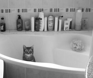 bain à son chat